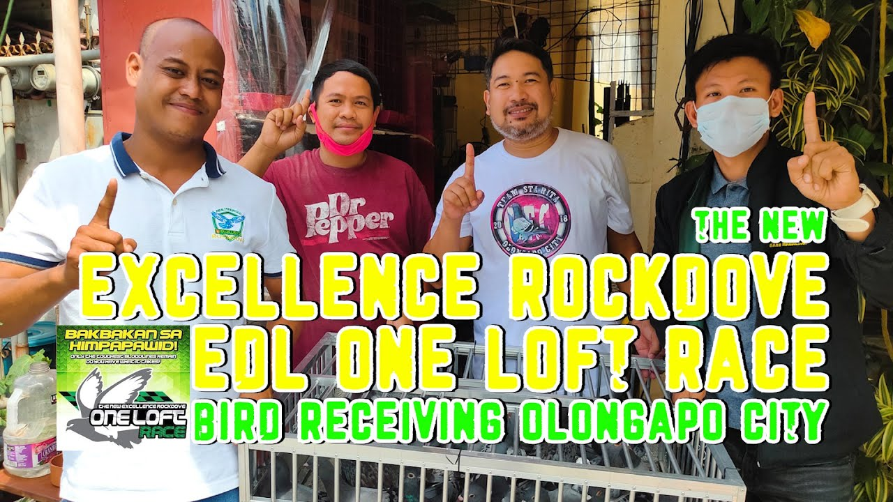 THE NEW EXCELLENCE ROCKDOVE AND EDL OLR BIRD RECEIVING (OLONGAPO CITY)