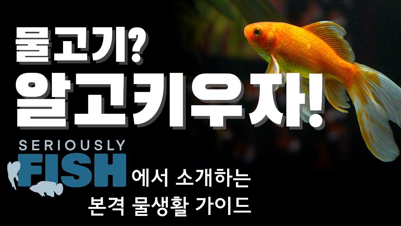 물고기, 제대로 알고 키우자! 물고기 웹진 Seriously fish를 이용해 사육정보 찾는 방법