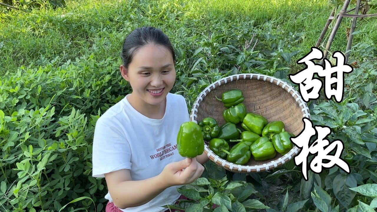 农田现摘的甜椒,小莉尝试新做法失败,一家人却很喜欢吃