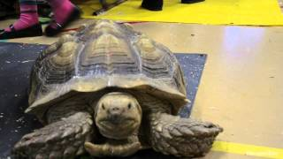 Long Island Pet Expo 2012
