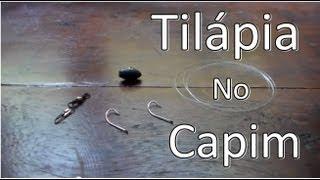 Sistema para Pescar Tilápias com Capim ...