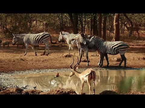 Meat Utilization by hunters in Africa
