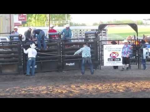 Dancing Bull knocks Rodeo Clown off Fence