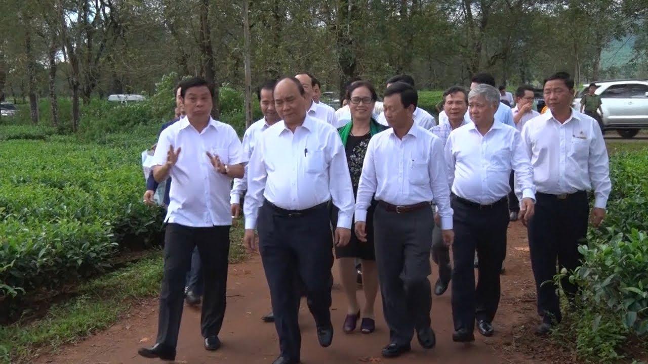 Thủ tướng Chính phủ Nguyễn Xuân Phúc thăm Công ty cổ phần chè Biển Hồ, Gia Lai