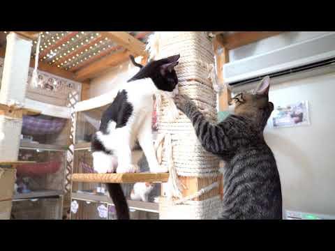 入れかわり立ちかわり 大塚こねこ軍団ズ - Kittens playing free in our shelter