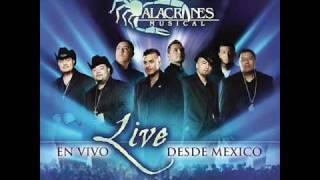 """Alacranes Musical """"Por Amarte Asi"""" En Vivo Desde Mexico"""
