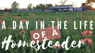 A Day In The Life Of A Homesteader Collab