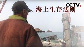 [中华优秀传统文化]海上生存法则| CCTV中文国际