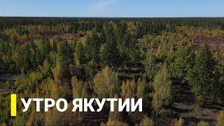 Утро Якутии: Лесовосстановление после пожаров. Выпуск от 09.09.21