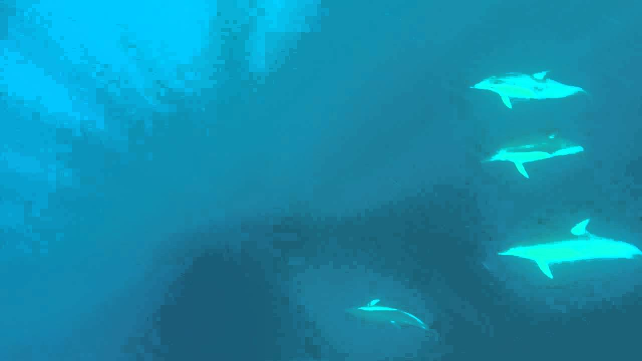 video Full Day Dolphin Tour
