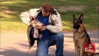 لمجرد الضحك: كلبٌ يأكل كلبًا