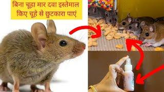 इसे रखते ही चूहे घर में घुसने की हिम्मत नहीं करेंगे आपके घर का रास्ता भूल जाएंगे।बिना चूहा मार दवा??