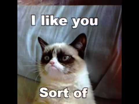 A Grumpy Cat, Wall-E Vine Video
