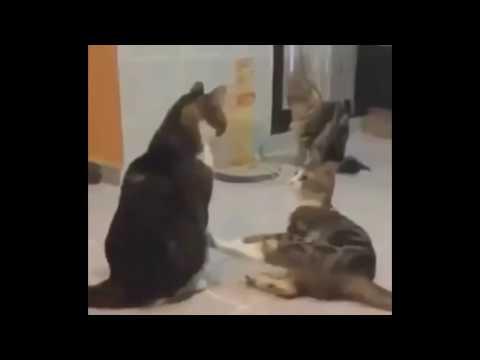 Cats scared by loud Spongebob music