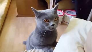 Говорящие коты! Озвучка! Лучшая подборка №2