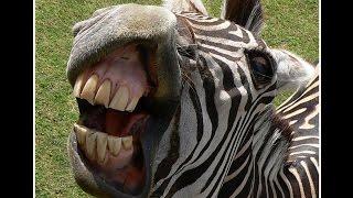 ТОП Самые ржачные фото самых смешных животных