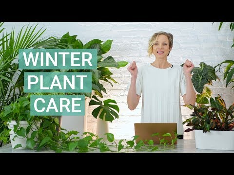 Winter Plant Care Tips