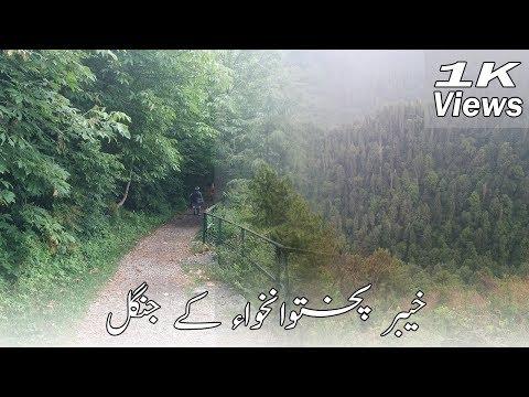 Ayubia National Park | Forest of KPK | Beautiful Pakistan