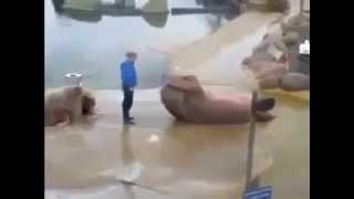 Razi cu lacrimi cand vezi o foca facand abdomene! Celelalte foci vor fi invidioase :))