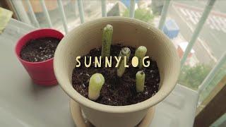 『SUNNY-LOG』 파테크하기, 계란샌드위치, 그릭요…