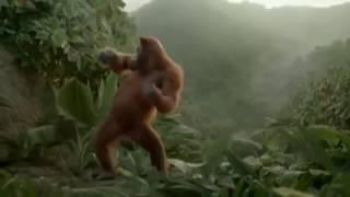 обезьяна мочит,отжигает по полной,танец обезьяны,танцуют все