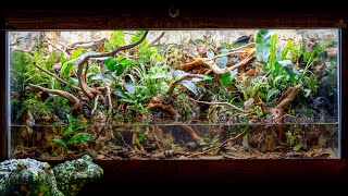 INCREDIBLE Fire-Bellied Toad Island Paludarium with Waterfalls