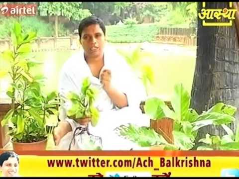 "Ayurvedic Benefits of ""Pathar Chatta"" in Kidney Stones Pain 