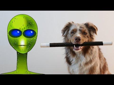 Abducted by Aliens - part 2/2 | Australian Shepherd & Icelandic Sheepdog