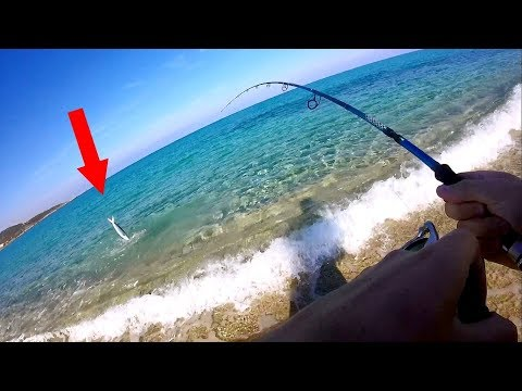 catching-mahi-from-the-beach-!!!-(corsica-part-1)