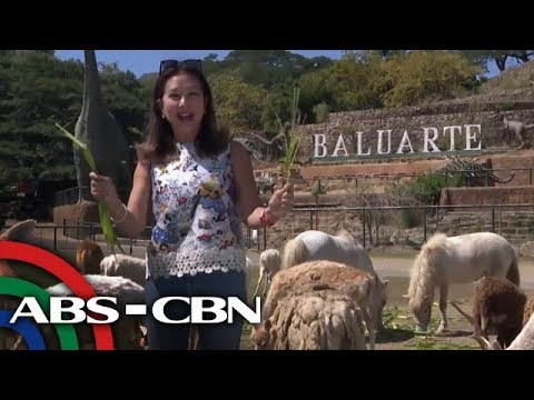 Rated K: Safari near the City | Baluarte sa Vigan, Ilocos Sur