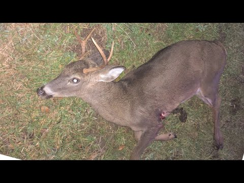 A Doe with Antlers / Funny Deer Hunt!