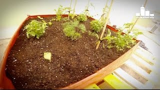 How To Plant Vegetables In A Sack Planter On The Terrace (time Lapse)
