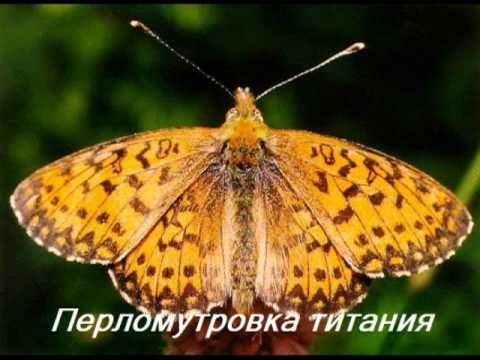 Красная Книга Карелии (бабочки).wmv