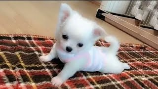 Dog Love Cute and Funny Dog Videos Compilation (2019)
