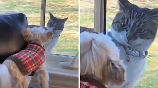 The Cat is Angry With The Dogs - Aww - Cite And Funny Cats - Pets Globe Video's 2020