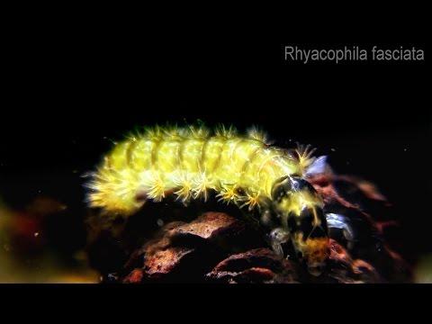 Bộ sưu tập côn trùng 2 - Page 27 Hqdefault