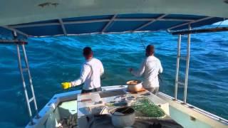 Yellowtail fishing 2015.
