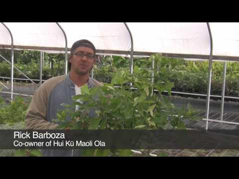 Five easy Native Hawaiian landscaping plants