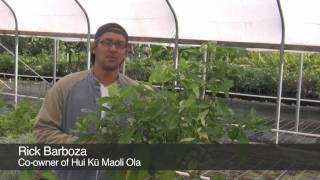 Five easy Native Hawaiian landscaping plants