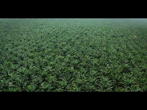 siembra-de-palma-africana-en-los-llanos-orientales-colombia---tvagro-por-juan-gonzalo-angel