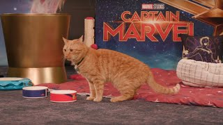 Marvel Studios' Captain Marvel | Goose the Cat LIVE!