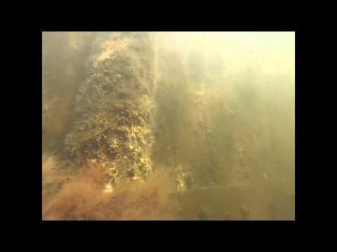 Scientific Underwater Investigation CJE 4763L