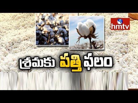 పత్తి రైతును ముంచిన నకిలీ విత్తనాలు | Cotton Farmers in Trouble | Telugu News | hmtv News