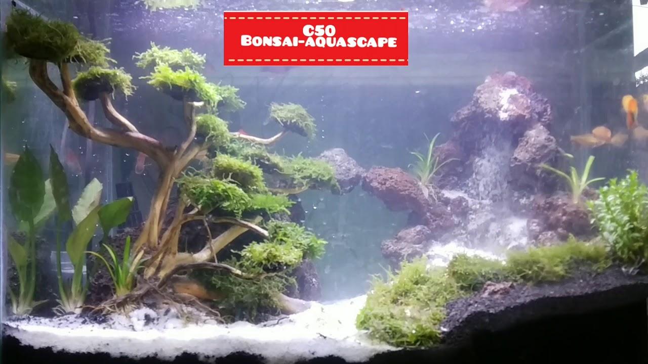 Aquascape Air terjun yang mudah part 1 - YouTube