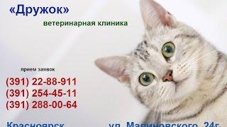 2017 Мурка. Кошки России Хочешь узнать - смотри(, 2015-02-04T19:16:31.000Z)