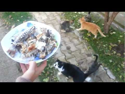 8 Hungry Cats eat Fish!