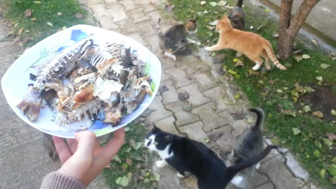 Can Cat Eat Fish With Bones