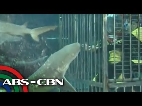 UKG: Swim with sharks at Manila Ocean Park