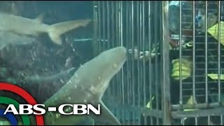 Swim with sharks at Manila Ocean Park