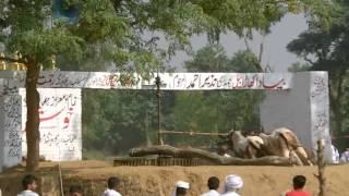 akhara chati 11 2012
